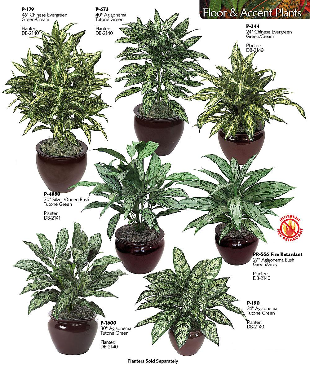 Best low light houseplants hard to kill houseplants for Low maintenance indoor flowers