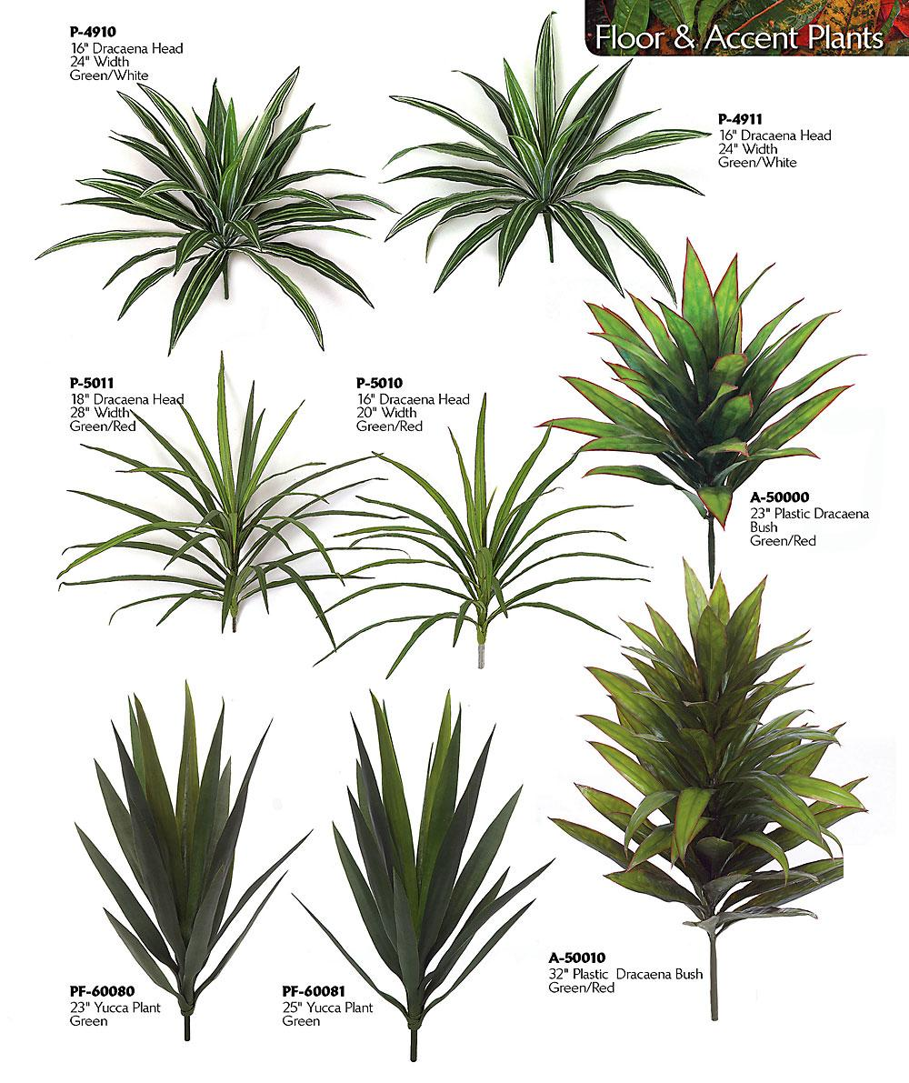 Yucca Plant Indoor Yucca Plants