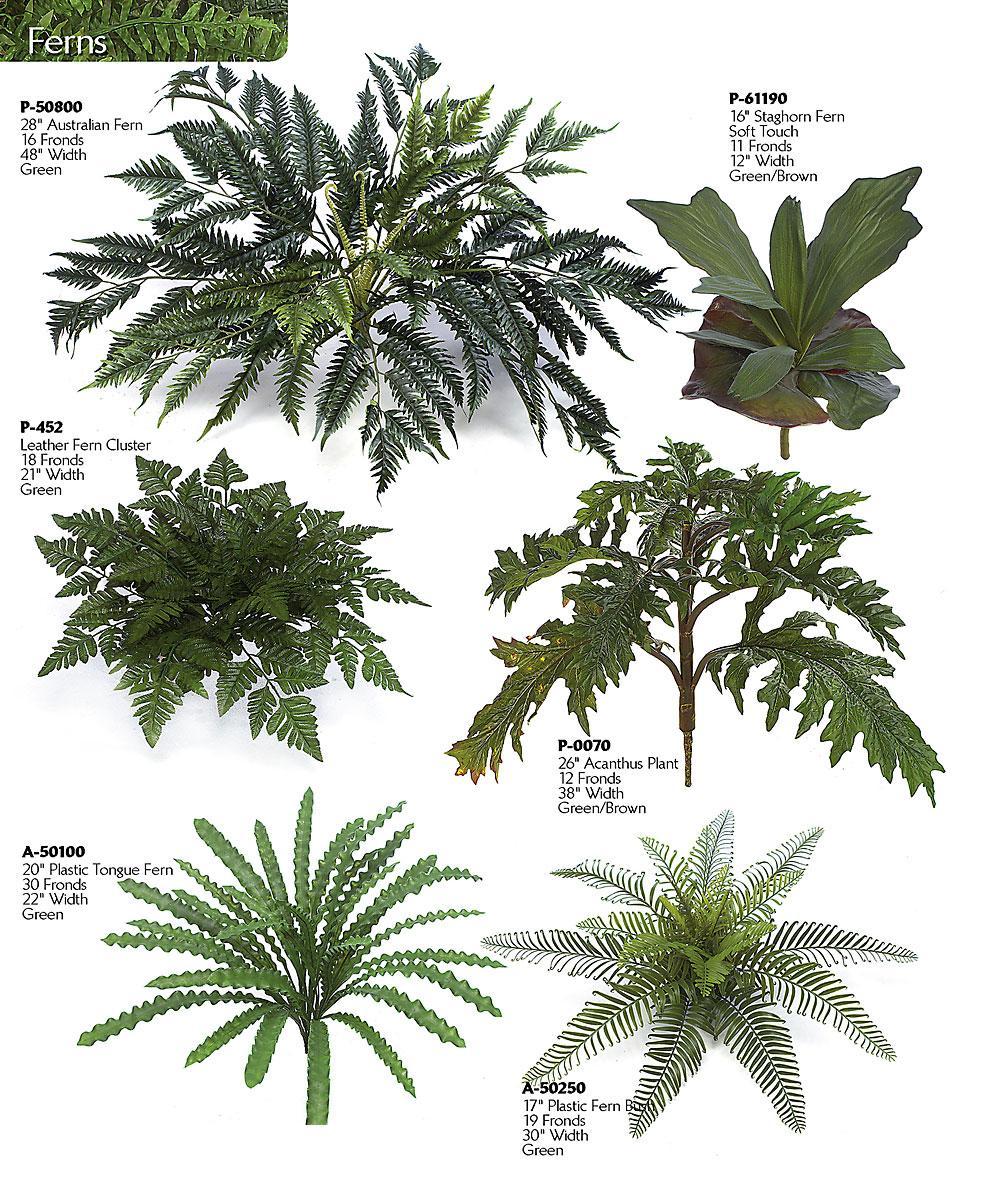 Artificial Ferns, tropical plants & Birds Ruffled Birds Nest Fern