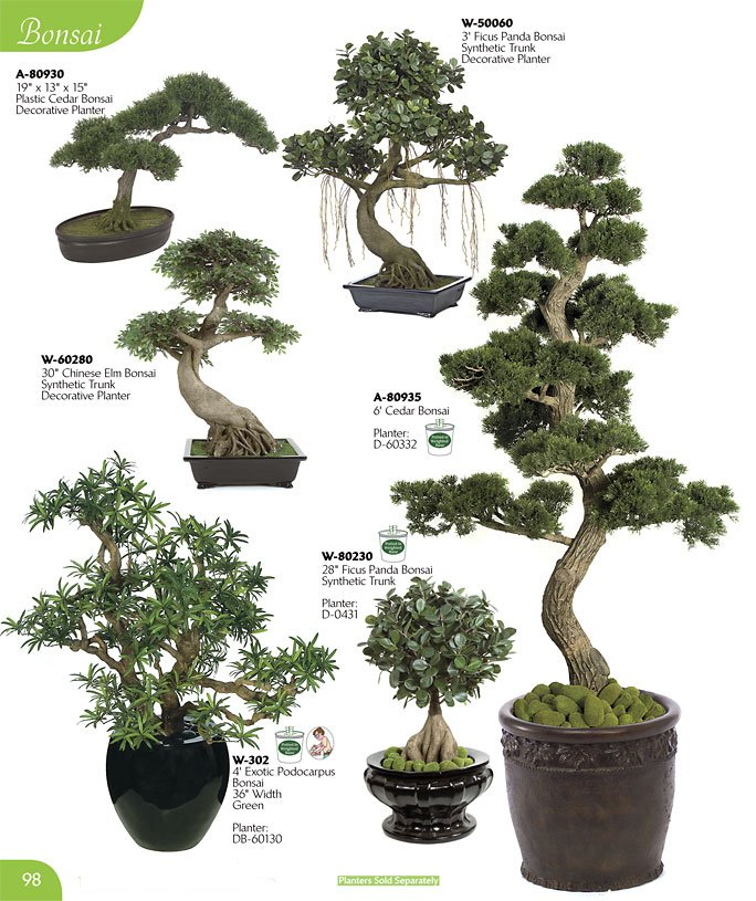 Alf img - Showing Panda Bonsai Plant