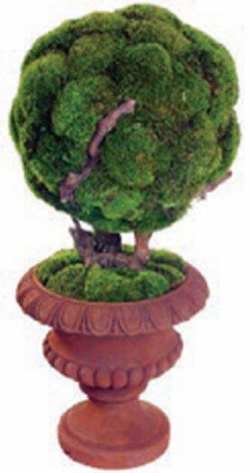 Earthflora Bonsai Tree 40 Preserved Moss Bonsai In Urn