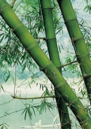 Oriental Artificial Bamboo Branches
