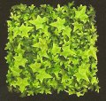 "A-2534 12"" Outdoor UV Rated English Ivy Mat (Sold in a set of 6pc)"