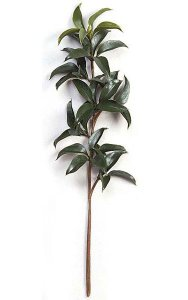 "22"" Mountain Laurel Branch - 8 Leaf Clusters - Green"