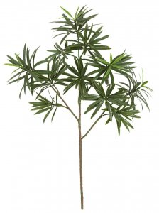 21.5 Inch Podocarpus Spray (Sold Per Piece)