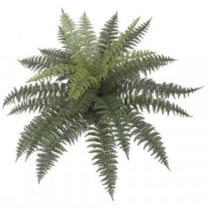 33 Inch X 24 Inch Medium Uv Outdoor Ruffle Fern