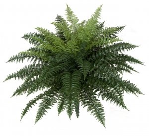 34 Inch X 26 Inch Outdoor Polyblend Large Ruffle Fern Made For Outdoor Use