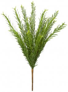 26 Inch Outdoor Irish Yew Bush