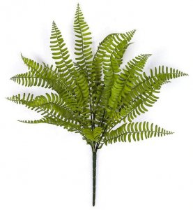 18 Inch L X 12 Inch W Boston Fern Bush