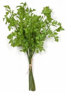 16 Inch Artificial Cilantro Bundle X 6
