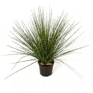 17 Inch Potted Pvc Zebra Onion Grass