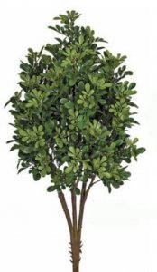 "33"" Plastic Outdoor Boxwood Boxwood Bush Tutone Green"