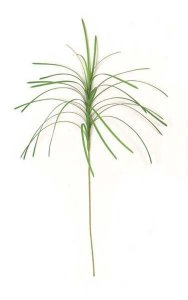 "30"" Plastic Monkey Grass - 27 Leaves - Green"