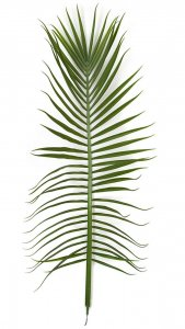 78.5 Inch Outdoor Uv Royal Palm Spray (Sold Per Piece)