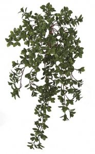 29.5 Inch Hanging Outdoor Uv Nematanthus Bush (Goldfish Plant)