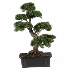 "24"" Cedar Bonsai Indoor/Outdoor"