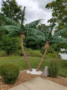 CP-1001 Custom Made Caribbean Palm Tree