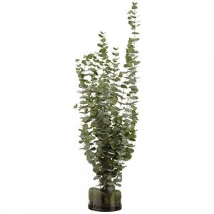 "4.5 Foot Hx18""Wx22""L Eucalyptus in Glass Vase Green"