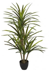 4.5 Foot Soft Touch Dracaena Marginata Plant