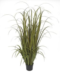 Earthflora's 68 Inch Wide Leaf Onion Grass - Mixed Green/red