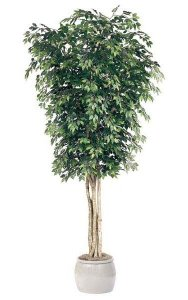 10' Ficus Tree - Natural Trunks - 3,648 Leaves - Green