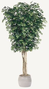 10' Ficus Tree - Natural Trunks - 3,648 Leaves - Green- FIRE RETARDANT