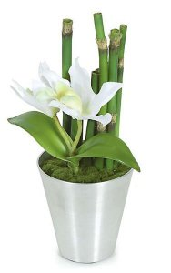 Potted Cattleya Flower and Bamboo in Silver Pot - 2 White Flowers