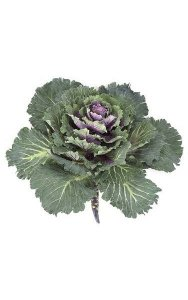 "14"" Flowering Kale - 39 Leaves - 16"" Width - Green/Purple"