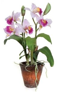 "15"" Potted Dendrobium Orchid with Leaves/Roots - Weathered Pot"