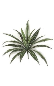 "16"" Dracaena Bush - 20 Green/White Leaves- FIRE RETARDANT"