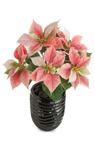 "22"" Poinsettia Bush - 17 Green Leaves - 5 Pink Flowers -  Bare Stem"