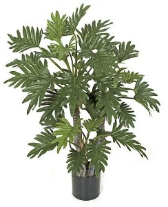 "40"" Selloum Philo Plant - 39 Green Leaves - Weighted Base"