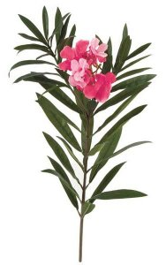 "28"" Oleander Branch - 6 Tutone Pink Flowers - 18 Buds - 5"" Stem"