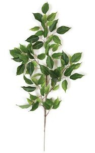 "29"" Ficus Spray - 75 Green Leaves"