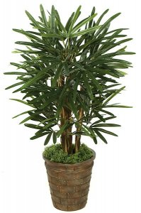 3' Lady Palm - 50 Fronds - Natural Trunks- FIRE RETARDANT