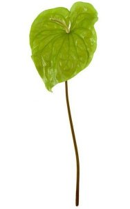 "30"" Anthurium Spray - 13"" Light Green Flower - Bare Stem"