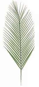 "31"" Areca Palm Branch - Light Green"