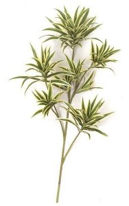 "32"" Dracaena Reflexa Branch - 141 Leaves"