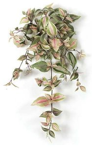 Frosted Wandering Jew Bush - 155 Green/Purple/Grey Leaves