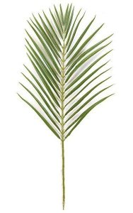 "35"" Areca Palm Branch - 32 Leaves - Tutone Green"