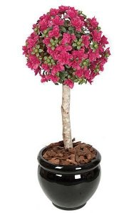 3.5' Plastic Azalea Ball Topiary - Natural Trunk - Beauty- Custom Made