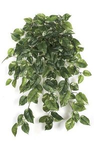 "35"" Outdoor Pothos Bush - Soft Touch - 190 Leaves - Green/Cream"