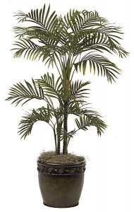 P-50900  4' Areca Palm - 22 Fronds - Green