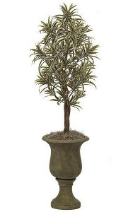 4' Dracaena Reflexa -Natural Trunks -Green/Yellow -Weighted Base