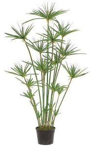 4' Papyrus Plant - 20 Heads - 197 Leaves - Green