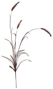 "40"" Foxtail Spray - Burgundy"
