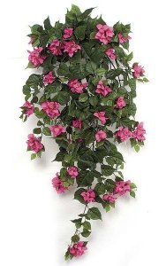 "42"" Bougainvillea Bush - 382 Leaves - 134 Flowers"