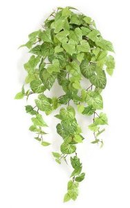 "42"" Potato Leaf Bush - 20"" Width - 141 Leaves - Light Green"