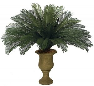 "44"" Cycas Palm Cluster - 36 Large Fronds - 68"" Width - Tutone Green"