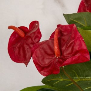 Earthflora's 22 Inch Reddish Orange Anthurium Bush